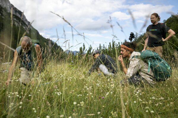 Collecte de plantes sauvages comestibles au Pif.camp 2020. © Katja Goljat & Matjaz Rust